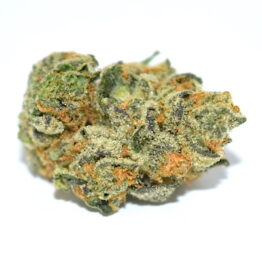 Girls Scout Cookies Strain
